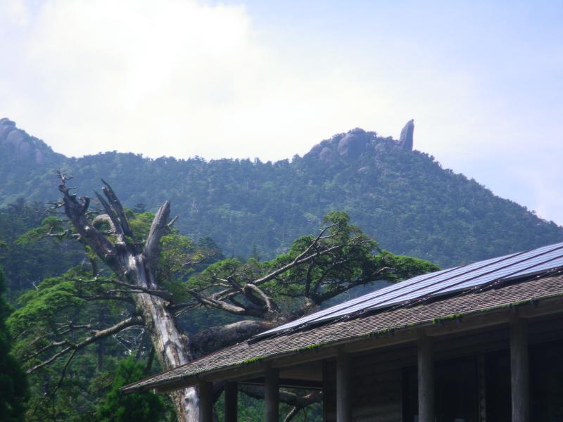 屋久島自然休養林ー太忠岳