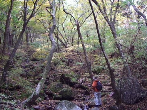 南登山道沿いの自然林