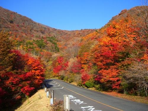 久住高原ロードパーク沿いの紅葉