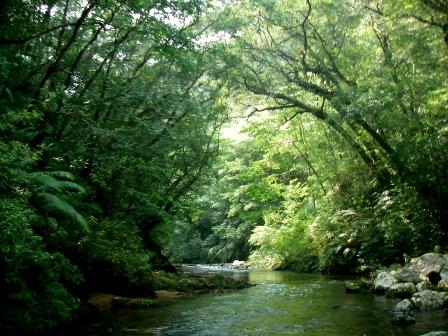 渓流沿いの森林