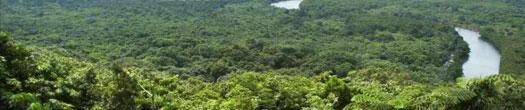 マングローブ林(西表島)