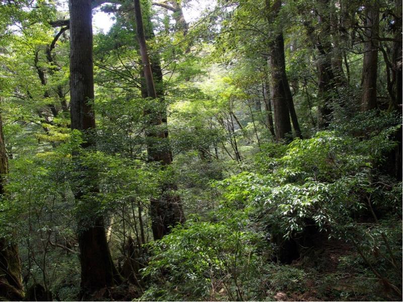 水土保全林