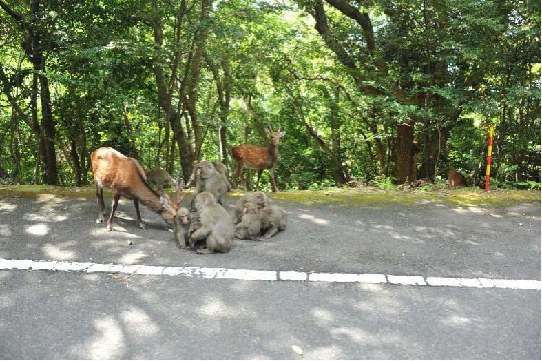 屋久島のヤクシカによる生態系被害等食害の状況