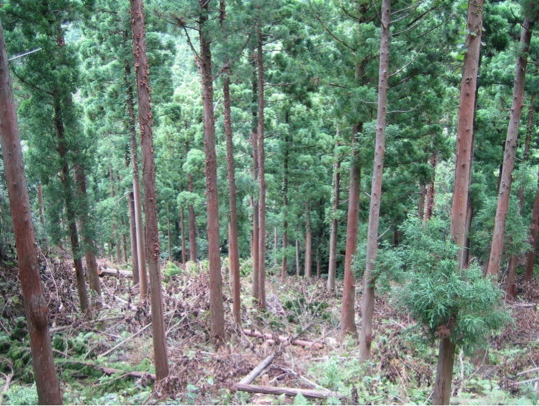 循環利用林