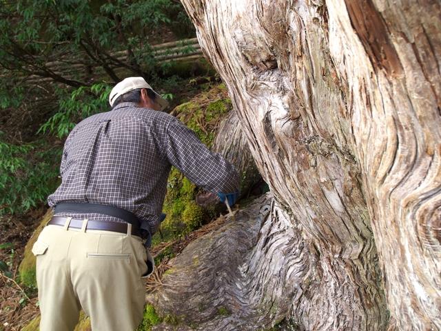 樹勢回復措置
