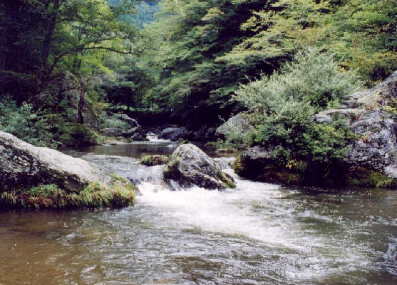 小田深山渓谷風景林