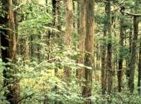 白髪山保護林