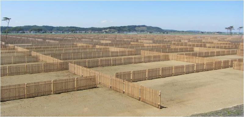 東松島市浜市地区海岸防災林(施工後)