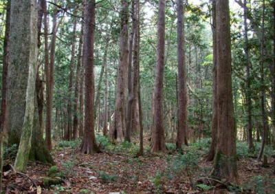 大畑無施業林の林況 無施業林の林況 森林管理局の概要 森林管理署等の概要  東北森林管理局/大畑