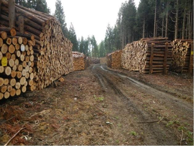 安定的な原木の供給