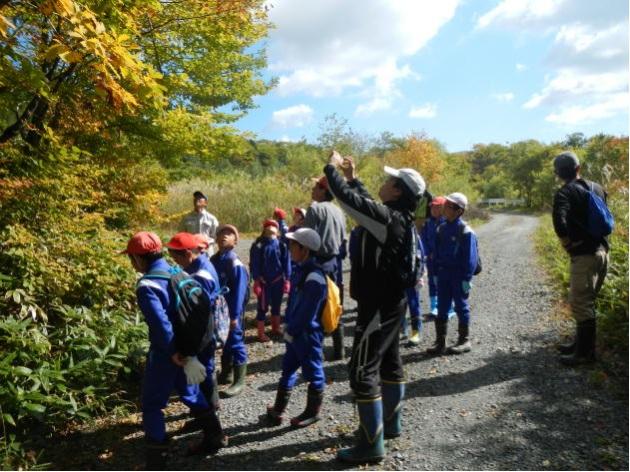 森林環境教育でのドングリ拾い