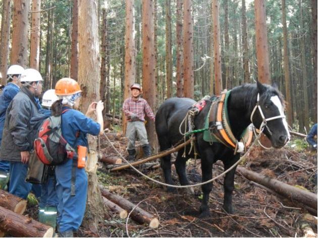 人材育成の一環としての馬搬見学