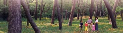 保安林内を歩く家族の写真