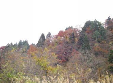 雄勝峠スギ植物群落保護林