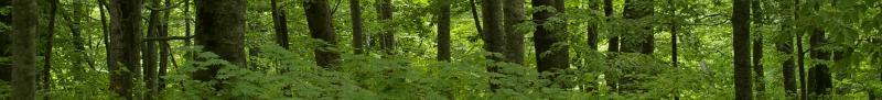 保護林トップ2画像