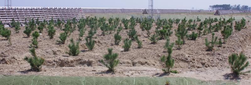 名取市海岸防災林活動箇所植栽後写真