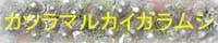 カツラマルカイガラムシ