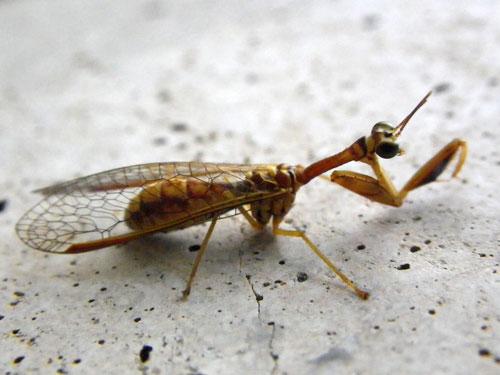 その他昆虫