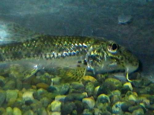 は虫類・両生類・魚類は虫綱両生綱硬骨魚綱