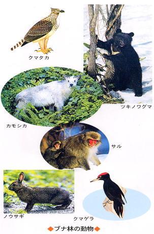 ブナ林の動物