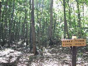ブナ二次林散策路の標識