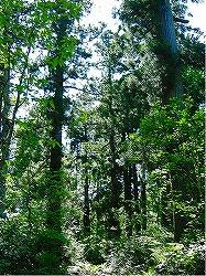 写真:奥羽山脈北西部森林生物遺伝資源保存林