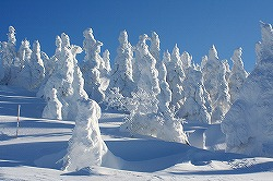 写真:森吉山スキー場の樹氷