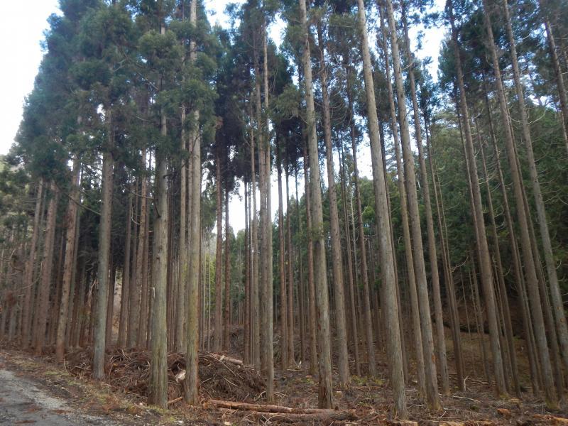 定性間伐320林班