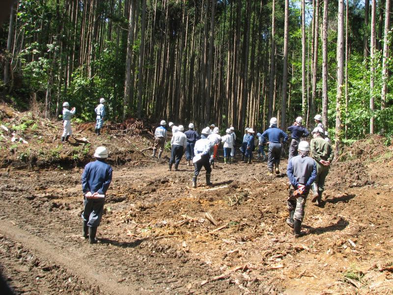 伐倒木の点検