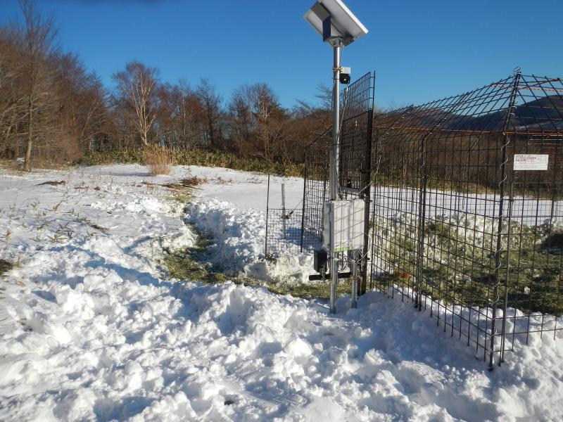 ワナ内の除雪