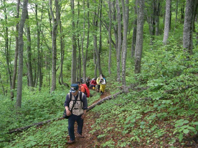 竜ヶ森の登山道